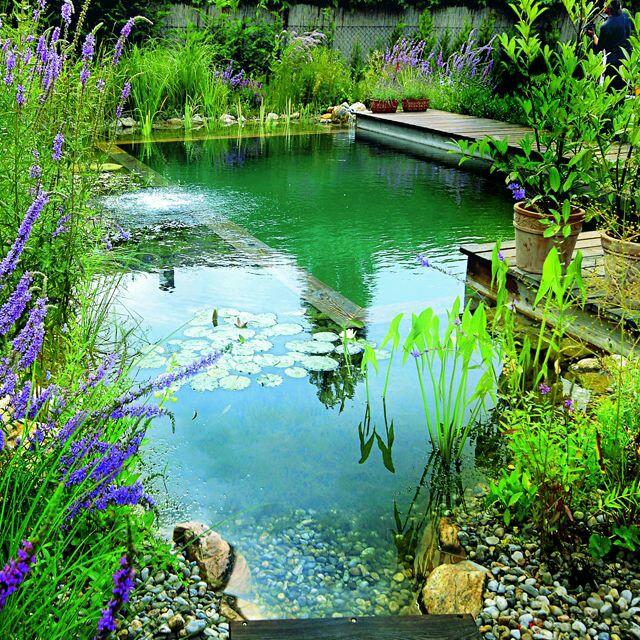 Распостраненные варианты био-бассейнов