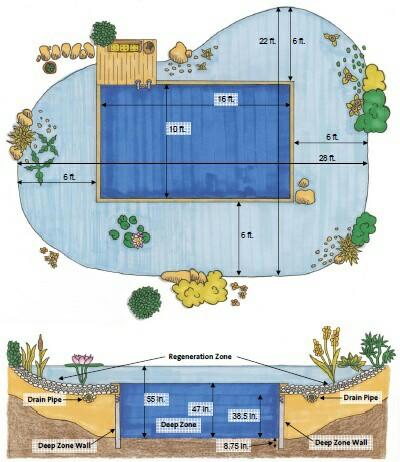 Схема натурального био-бассейна