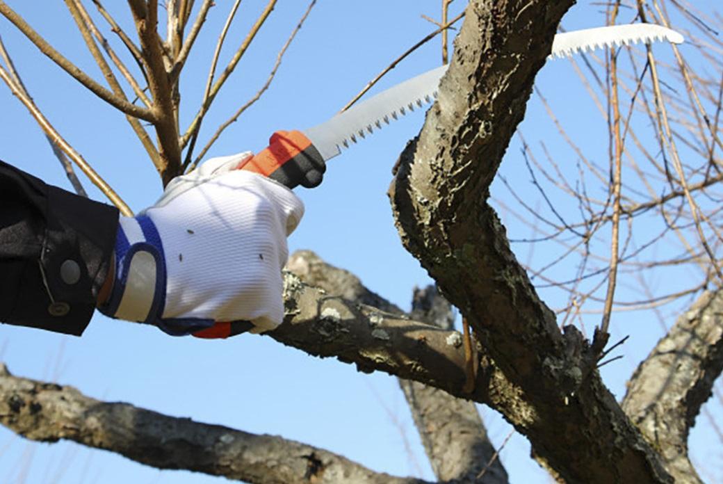 Мощное лезвие имеет высокую жесткость и острые как бритва, агрессивные зубья, которые оставляют гладкий спил дерева